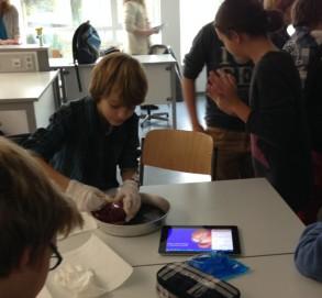 Herzpräparation im Biologie-Unterricht in Klasse 7 mit einem Film als Anleitung auf den iPads